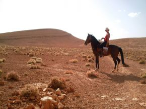 Horse riding and trail rides