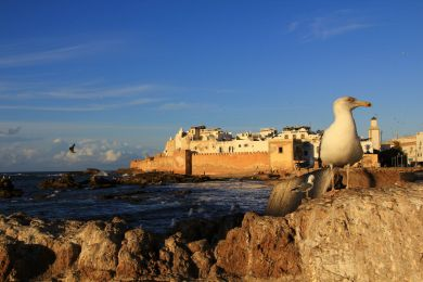 Marrakech and Essaouira : Lodge and self drive